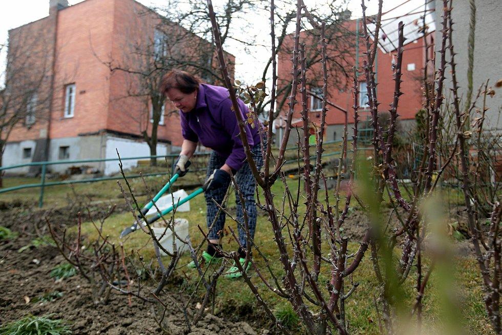 Bohuslava Růžičková ze zlínské Lesní čtvrti ošetřuje záhon s růžemi; sobota 27. března 2021