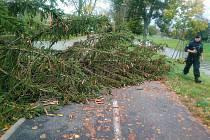 Utržený semafor a spadlý strom na cyklostezce