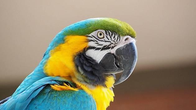 Tip z Kroměřížska: Burza drobného zvířectva a exotického ptactva
