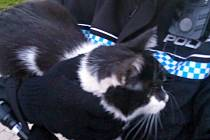 Kotě zachráněné zlínskými strážníky