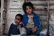 Kino Napajedla: Kafarnaum