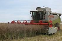 Žně na Zlínsku jsou už v plném proudu. Například v úterý 24. července 2012 kombajnisté zdolávali pole řepky na okraji zlínské místní části Štípa.