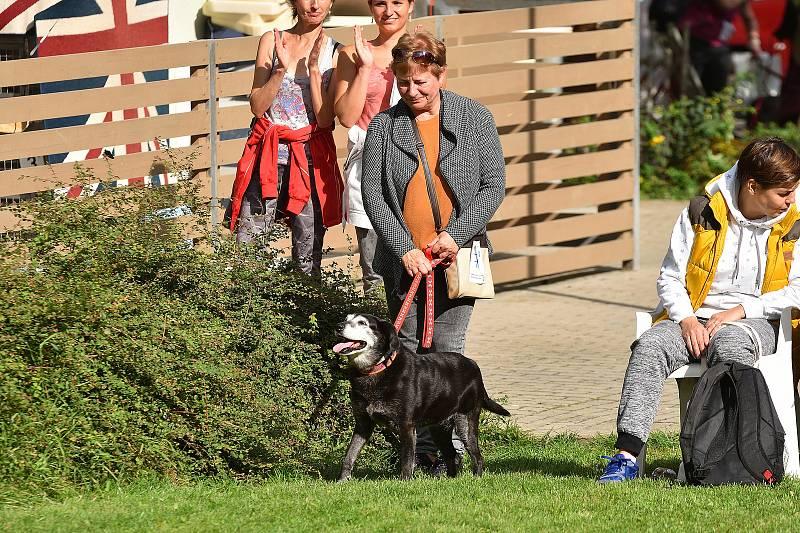 Podzimní setkání útulkových pejsků a jejich pánů, přivedlo do Útulku pro opuštěná zvířata vnouzi ve Zlíně na Vršavě opět desítky lidí a hlavně jejich nové čtyřnohé kamarády.