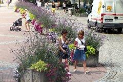 Květinová výzdoba na náměstí Míru ve Zlíně.