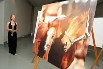 Výstava Koně a Napajedla v muzeu v Napajedlích.