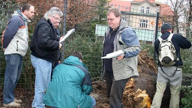Místo tragického pádu stromu ve Zlíně zkoumají další znalci