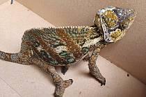 Strážníci odchytávali ve Zlíně chameleona  - uprchlíka.