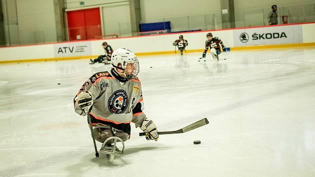 Sledge hokejisté Zlína se po více než sedmi měsících představí na domácím ledě.