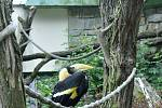 Zoo Zlín slaví chovatelský úspěch světového významu. Tím je odchov mláděte dvojzoborožce indického.