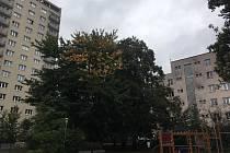 Okolí ulic Lorencova a Bratří Jaroňků ve Zlíně