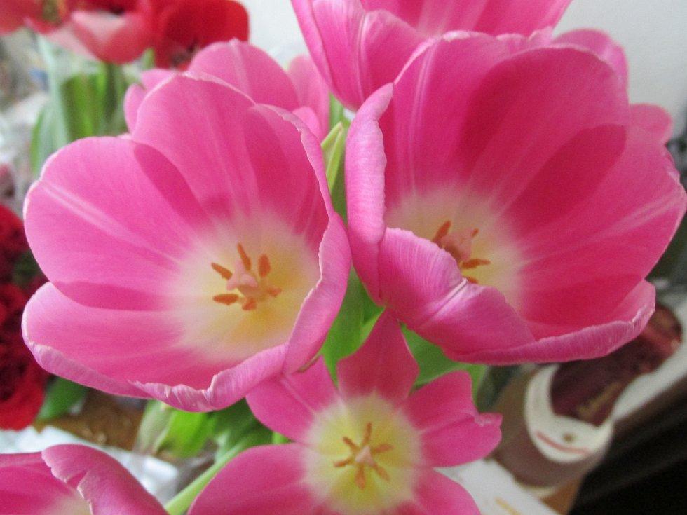Jarní foto ze Vsetína