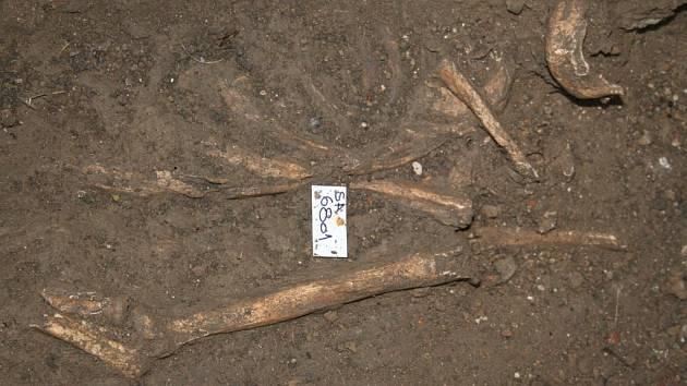 Kosterní pozůstatky nalazené u vizovického zámku. Pravděpodobně jsou ze 13. až 14. století.