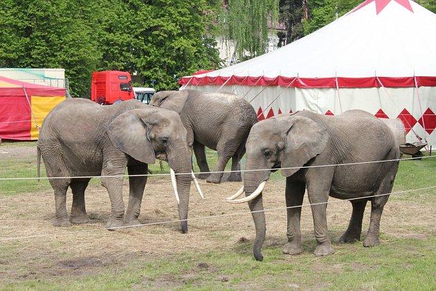 Trojice slonů v areálu Cirkusu Humberto ve Zlíně. Jeden z nich v úterý 9. května 2017 chytil chobotem za popruh kabelky ženu, která jej chtěla svévolně nakrmit. Po pádu skončila v nemocnici se zlomenou nohou.