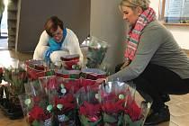 Vánoční růže pomáhají nemocným dětem. Přispěli i zaměstnanci otrokovického úřadu
