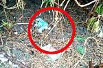 V závěru prvního srpnového týdne našli zlínští strážníci na dětském hřišti v ulici Křiby na sídlišti Jižní Svahy za jednou z laviček odhozenou použitou injekční stříkačku s jehlou.