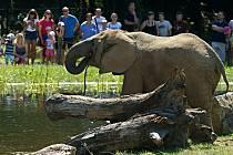 Nový výběh pro slony ve zlínské zoo
