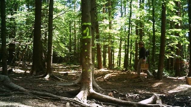 Snímek ženy zachycený fotopastí v okolí Vrbětic. Je na něm pohřešovaná žena?