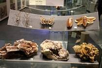 Výstava Létající drahokamy v muzeu jihovýchodní Moravy ve Zlíně.