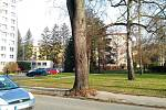 Kácení stromů ve Zlíně. Ulice 2. května