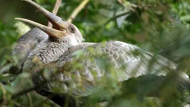Zlínska zoo v Lešné má nové přírustky – jsou jimi mláďata nesyta afrického.