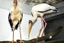 Čtrnácti vzácnými teplomilnými ptáky nesyty se může nově pochlubit Zoo Zlín Lešná.