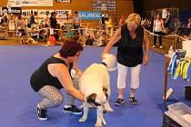 V sobotu 9. června 2018 se konala ve zlínské Sportovní hale Euronics 34. Krajská výstava psů Zlín.