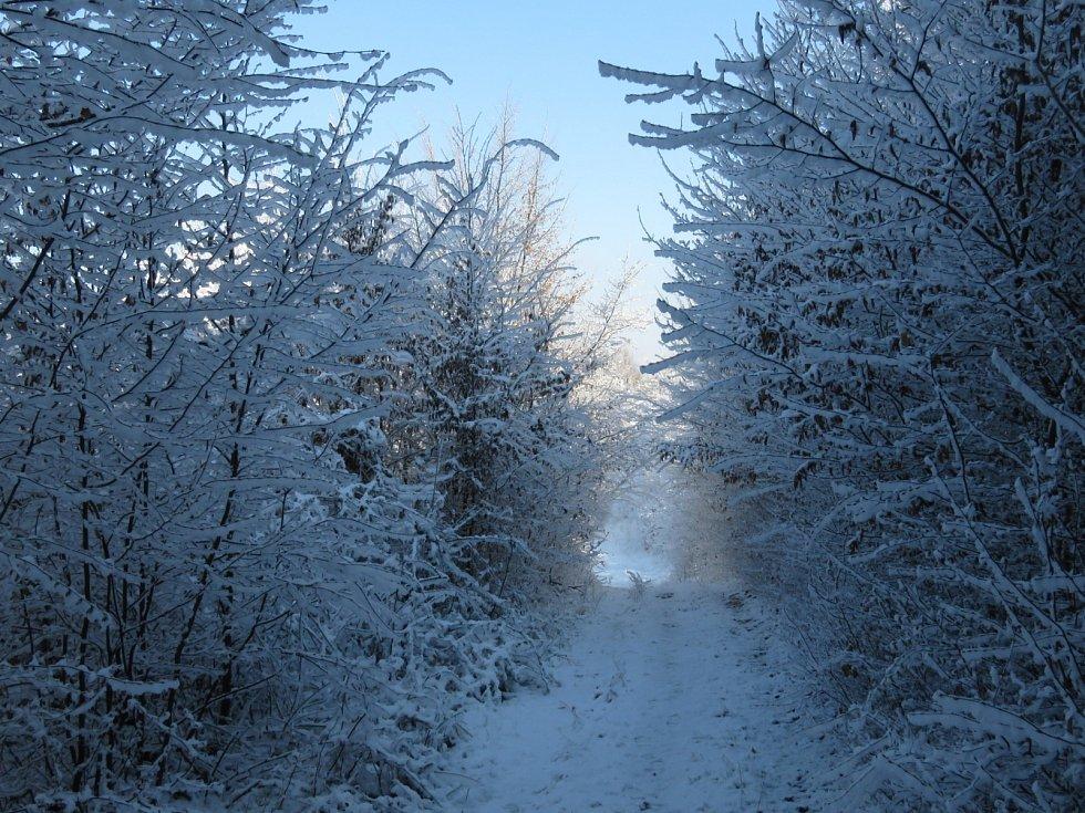 Lesní cesta v lese SV u města Zlín, 1. 4. 2020
