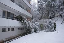 Těžký sníh láme stromy