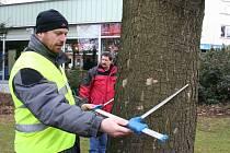 Kontrola stromů v zámeckém parku.