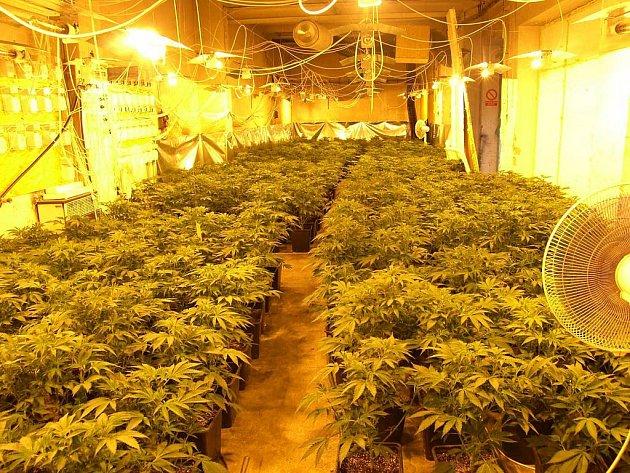 Otrokovičtí hasiči narazili na pěstírnu marihuany.