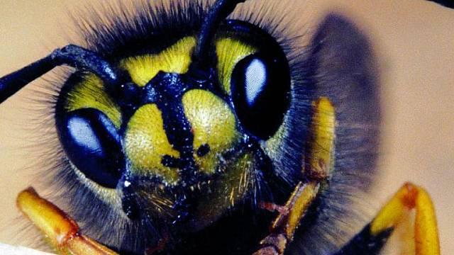 Na útok některých druhů hmyzu se nedá zapomenout.