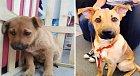 Malý Rambo, žil sám na ulici. Povedlo se z něj vychovat úžasného oddaného psa.