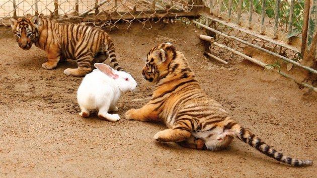Jen počkej, králíčku!