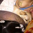 Miley takhle usínala se svými psími miláčky...