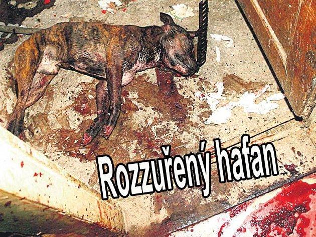 Krev, kam se člověk podívá. Rozzuřené zvíře roztrhalo paničku na kusy a zastavily je až dvě kulky z pistole.