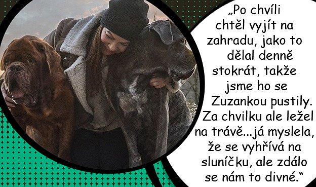 Anna Kztratila vjednom dni své dva psí miláčky.