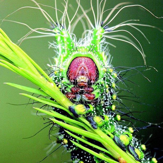 Jako vetřelec vypadá hmyz zblízka.