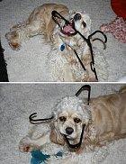 Psí omyly jsou někdy velmi legrační.