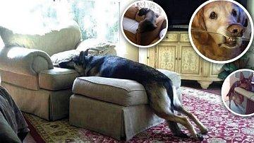 Každý příkaz má svou mezeru. A pes ji vždycky najde!