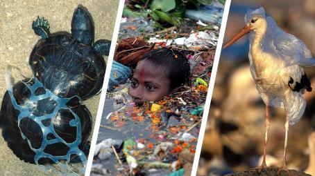 Jak plasty ohrožují svět?