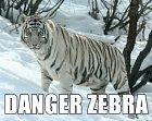 Hodně nebezpečná zebra.
