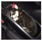 Konečně auto, které má držák na štěně.