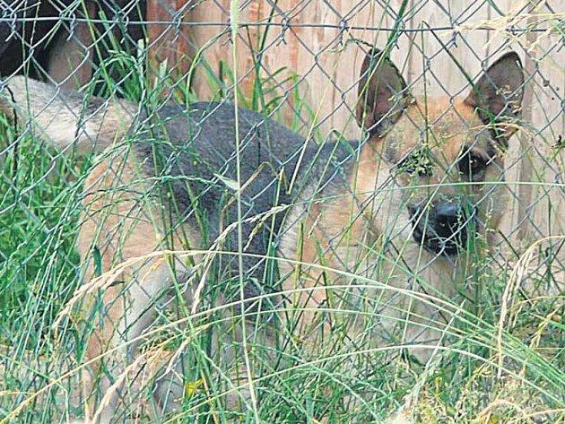 Pes Max žije v malém kotci na zarostlé zahradě ve Svitavách.