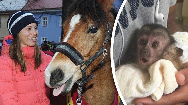 Eva Samková s koněm... A čípak je opička?