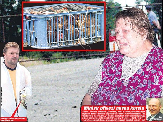 Veterinář i přes protesty majitelky papouška usmrtil