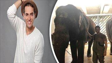 Z oblíbeného zpěváka se na chvíli stal chovatelem slonů.
