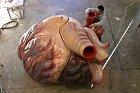 Srdce plejtváka obrovského