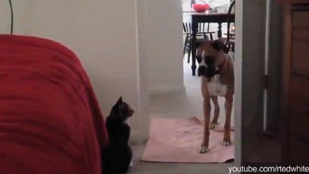 Výraz psa mluví za vše.