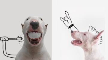 Pes, fixa a pár rekvizit. To vše stačí k umění.