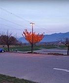 Strom, jehož listy ještě neopadaly, protože nad ním svítívá lampa.